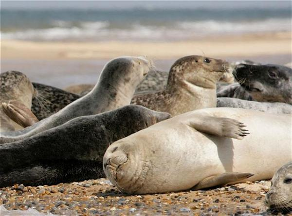 Common and Grey Seals by Terry Stanford