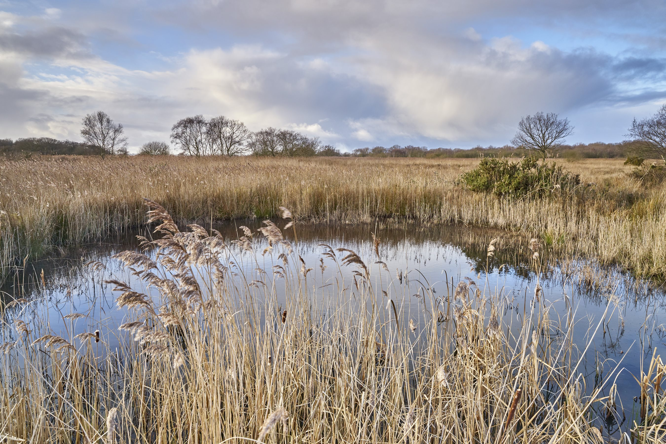 World Wetlands Day celebrates major public commitment to securing Norfolk's finest wetland