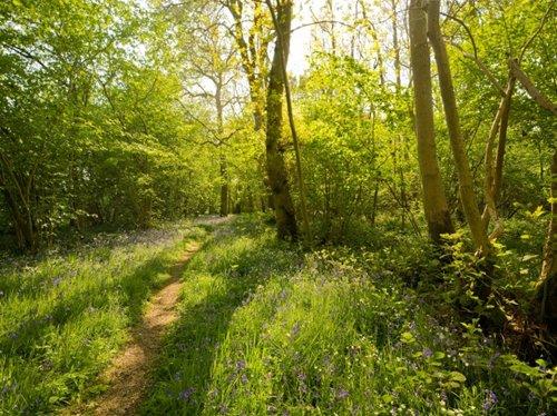 Foxley Wood Norfolk Wildlife Trust