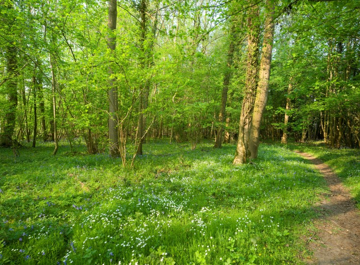 Lower Wood, Ashwellthorpe