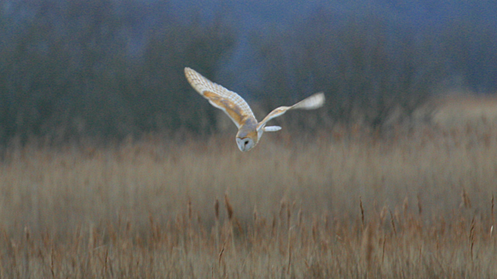 NWT Sound of The Dark, NWT Cley Marshes, Cley, North Norfolk Coast | A special chance to see the reserve by the light of the full moon and experience the sounds of the nocturnal nightlife.  The walk will start with a warming bowl of soup in the visitor centre. | birds, walk, nightime, talk, outdoors