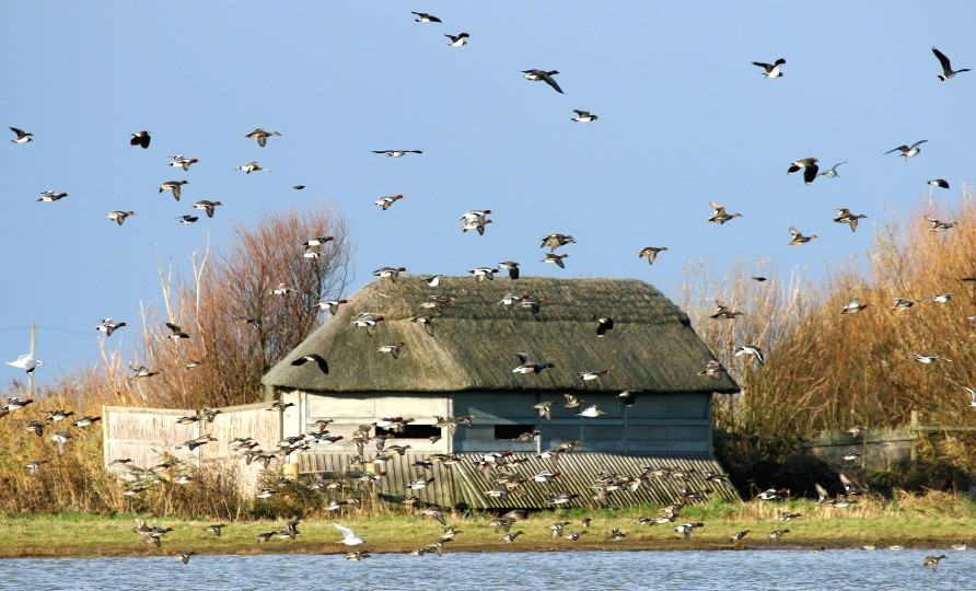 Bird watching hide at NWT Cley Marshes, photo by Barry Madden