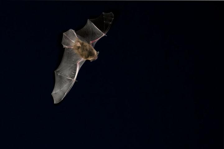 2018-03-26 Bats in churches