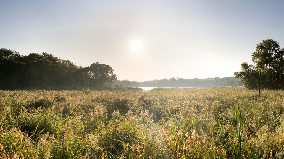 Norfolk has a fantastic array of habitats to explore and wildlife to see!