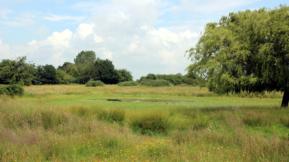 New Buckenham Common, photo by Barry Madden