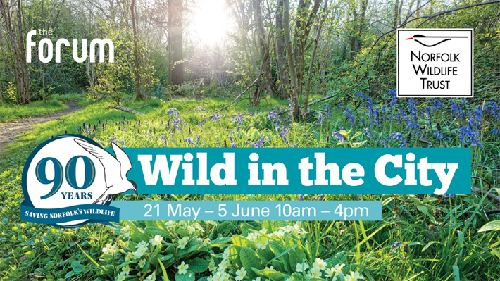 2016-05-17 Wild in the City starts on Sat