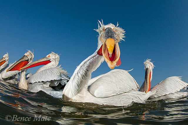 2017-05-15 Bird Photographer of The Year