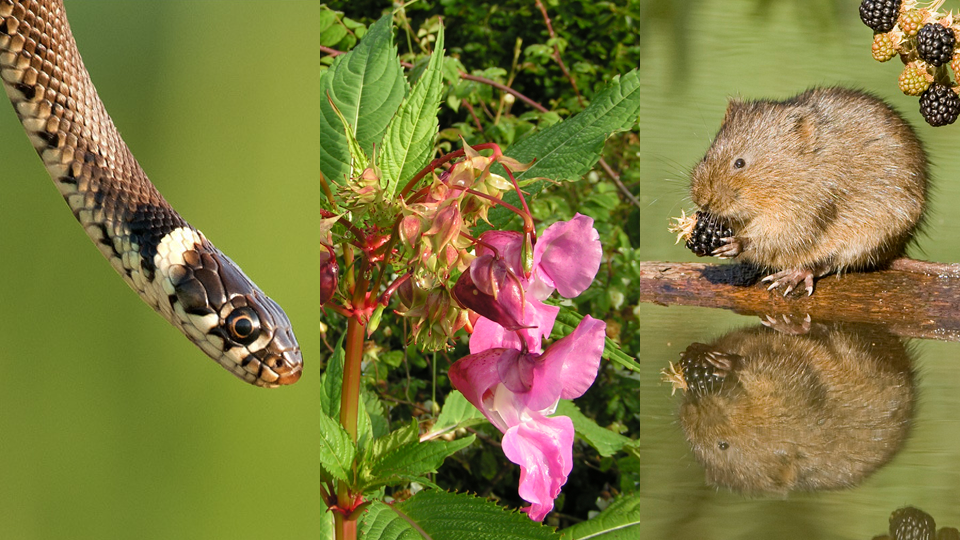 2015-07-17 Our wildlife survey needs your