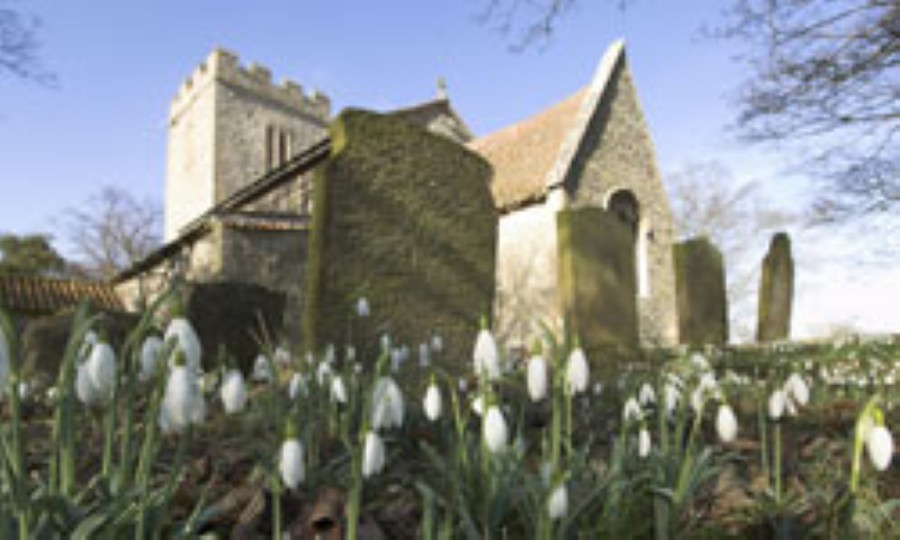 Snowdrops in a churchyard, photo by David North