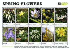 Spring wildflowers spotter