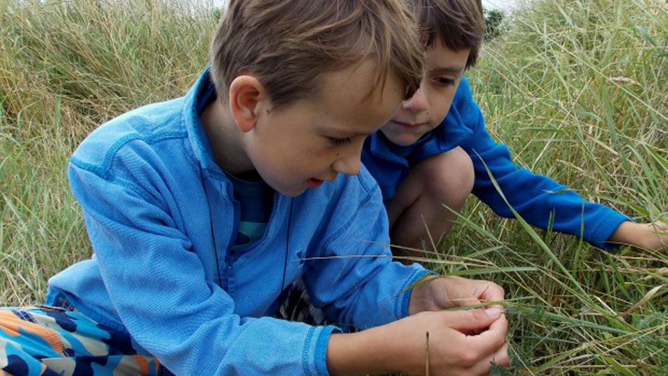 Brilliant Butterflies, NWT Cley Marshes NR25 7SA | Learn about the lives of these fascinating and colourful creatures with a day of activities led by the Norfolk Butterfly Conservation Trust | Family, nature, activities