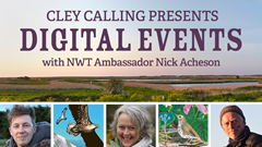 Cley Calling Remotely: NWT presents new season of digital wildlife discussions