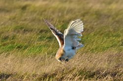 When is the best time to move barn owl nest boxes?
