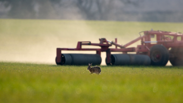 Brown-hare-with-farm-machinery,-credit-David-Tipling