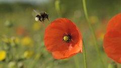 Very bad news for bees warns Norfolk Wildlife Trust