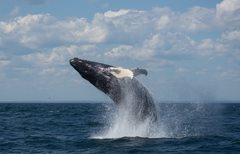 2020-11-28 Whales, Dolphins & Porpoise on