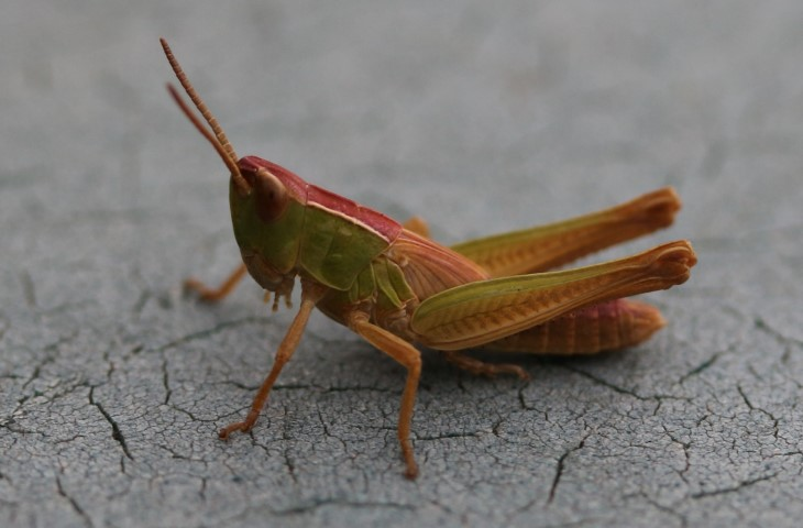 2018-08-25 Grasshoppers and Crickets