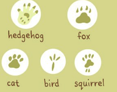 Collect animal footprints