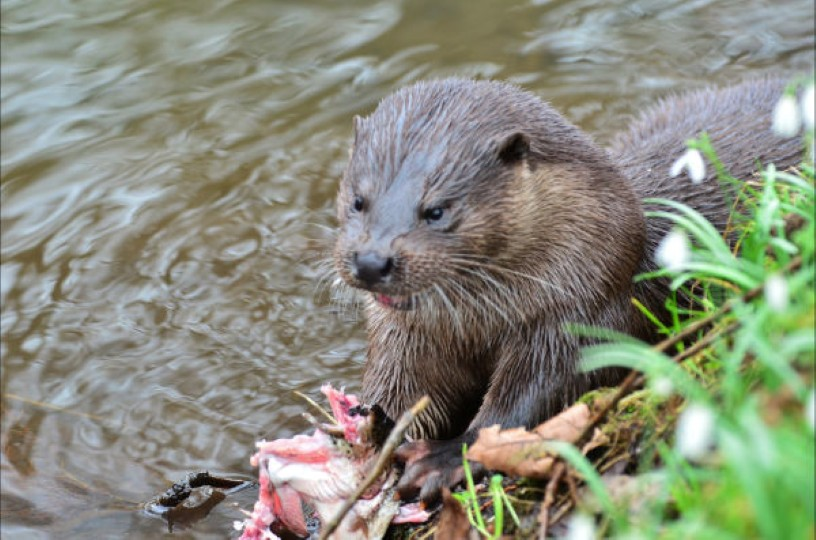 Protected Species Survey: Otters