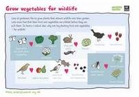 Grow vegetables for wildlife