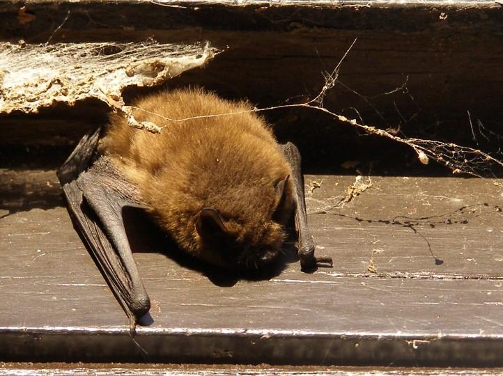 Bats in the Norwich area