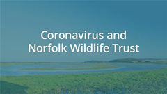 Coronavirus and Norfolk Wildlife Trust