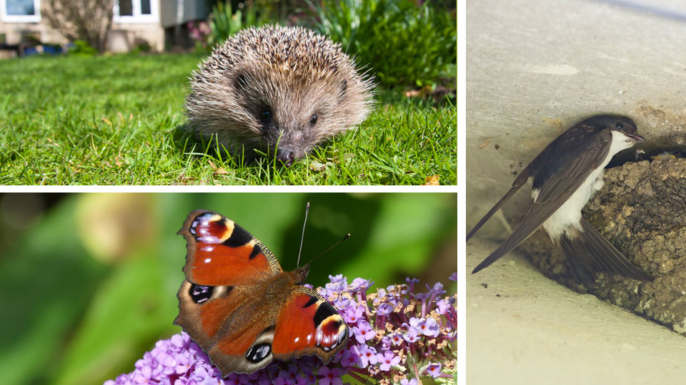 Summer garden wildlife survey to help protect species in Norfolk