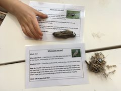 2020-05-29 Nature Detectives at Ranworth