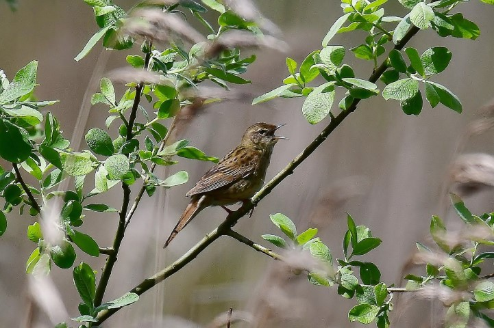2019-06-01 Introduction to Broadland Bird