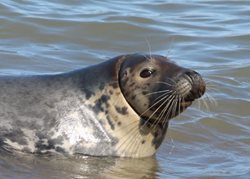 I have seen a seal with plastic or netting round its neck, what should I do?