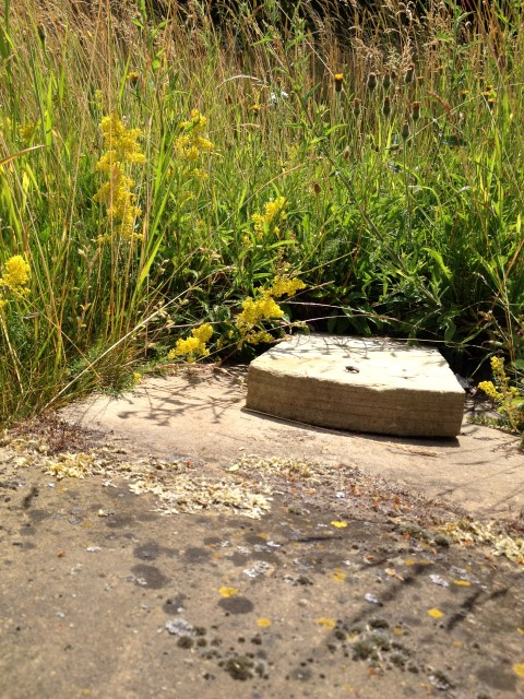 Lady's bedstraw at Great Cressingham by Emilt Nobbs