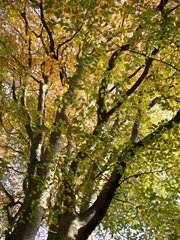 Beech, Felbirgg, David North