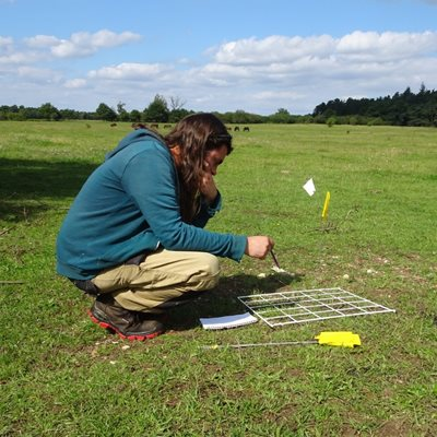 Flora survey by the Breckland Flora Group
