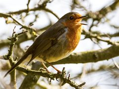 International Dawn Chorus Day 2021