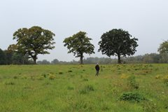 Remarkable restoration underway to benefit Brecks landscape