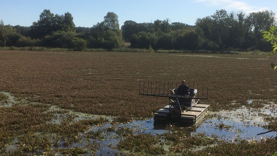 Water soldier removal at Thompson Water
