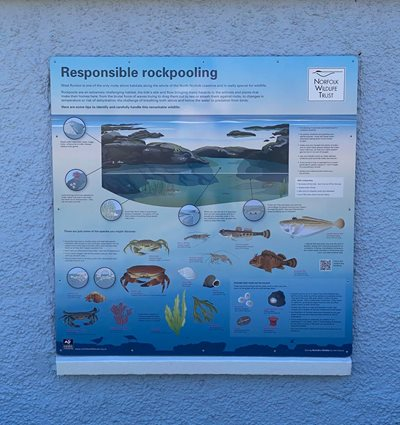 Responsible rockpooling panel