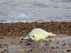 I have found a seal pup all on its own, what should I do?