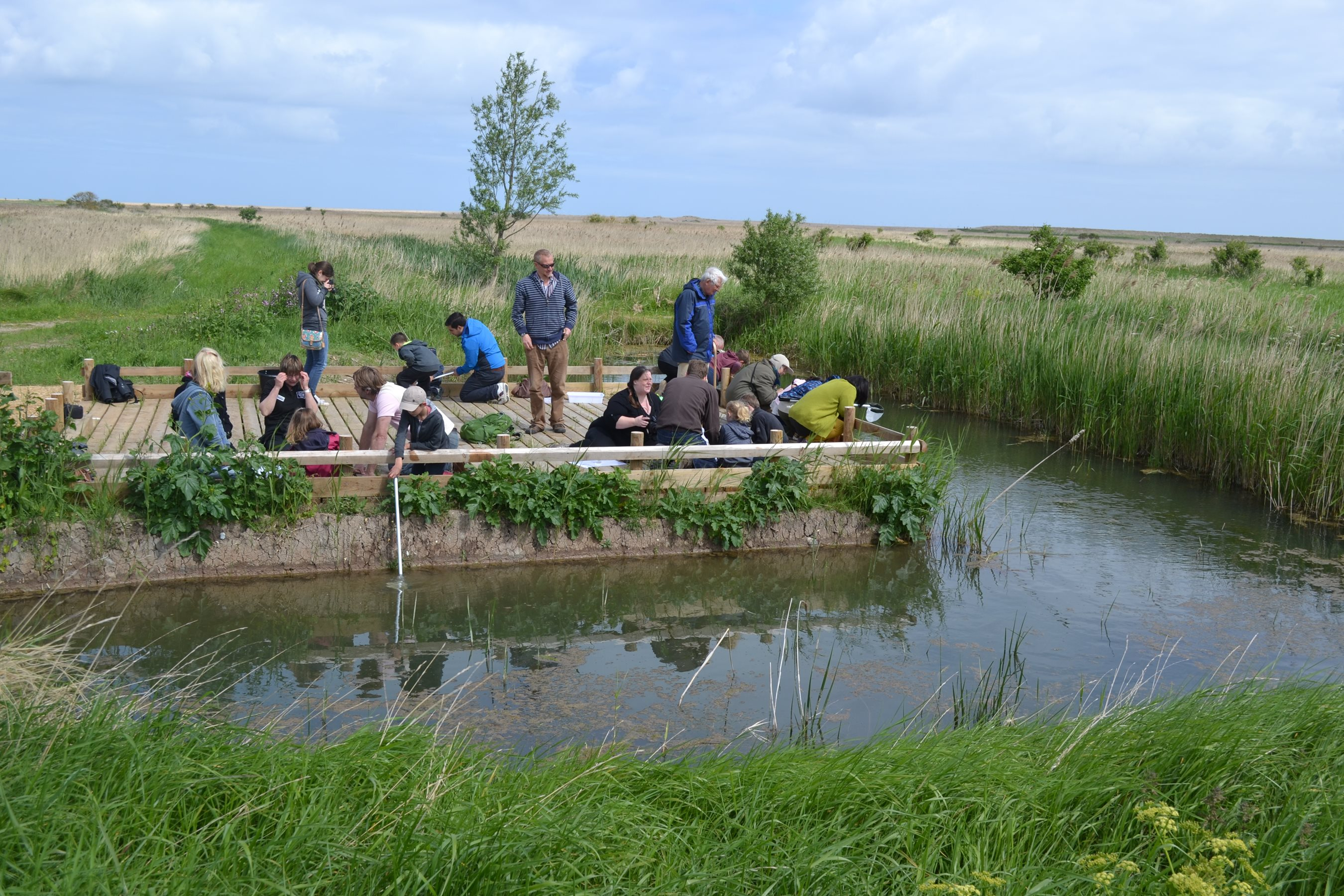 2017-08-23 Pond Dipping