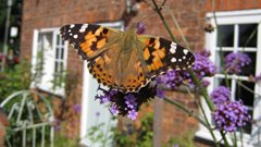 Grow a secret garden for butterflies!