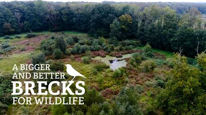 Help us create a bigger, better Brecks for wildlife