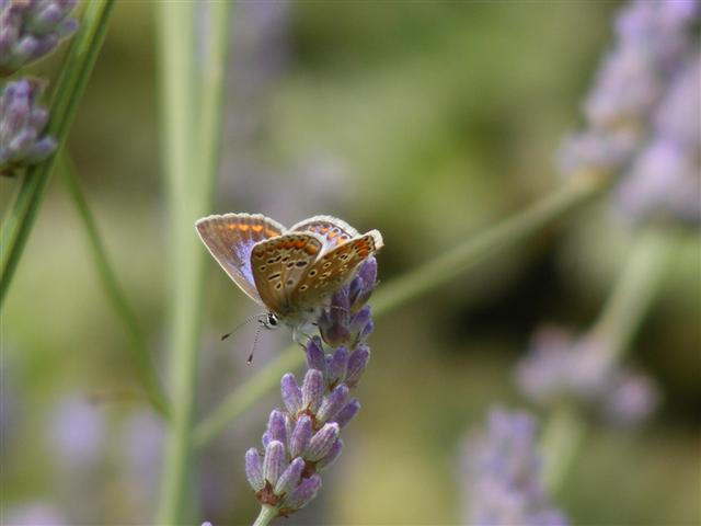 Big Butterfly Count 2019, NWT Cley Marshes NR25 7SA | The big butterfly count is a nationwide survey aimed at helping to assess the health of our environment.  | Family, nature, activities