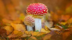 The secret world of fungi