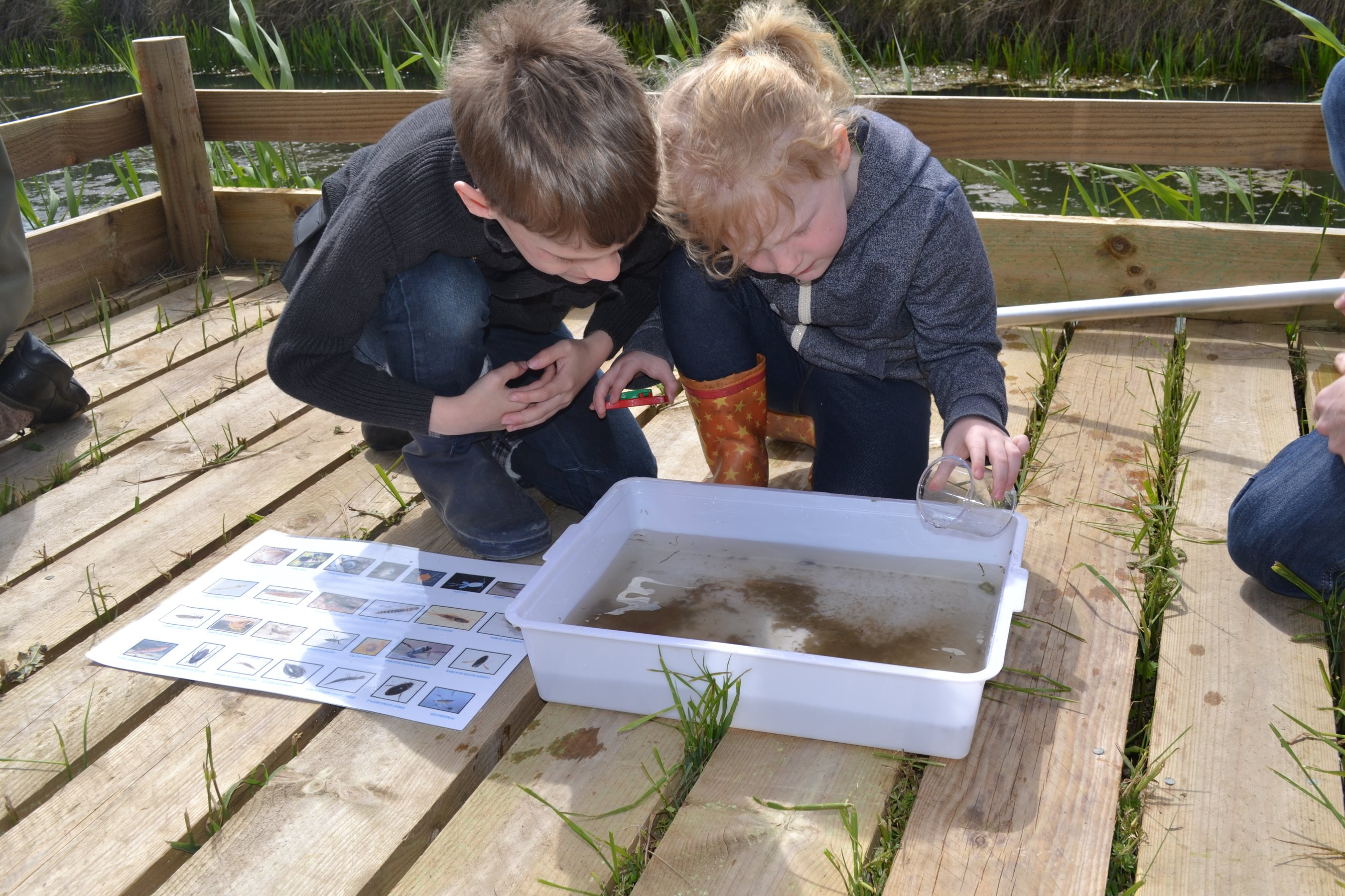 2019-05-28 Pond Dipping