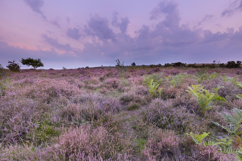 NWT Roydon Common, Richard Osbourne