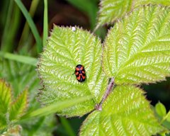 2019-07-24 Summer Insect Walk at NWT Pign