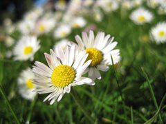 Letting your lawn bloom for wildlife
