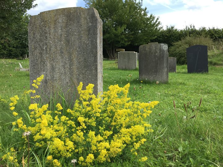 Beautiful Burial Grounds, NWT Cley Marshes, Coast Road, Cley next the Sea, Norfolk, NR25 7SA | Churchyards are a fantastic place for wildlife.  | nature, wildlife, outdoors, churchyards, biodiversity, lunch