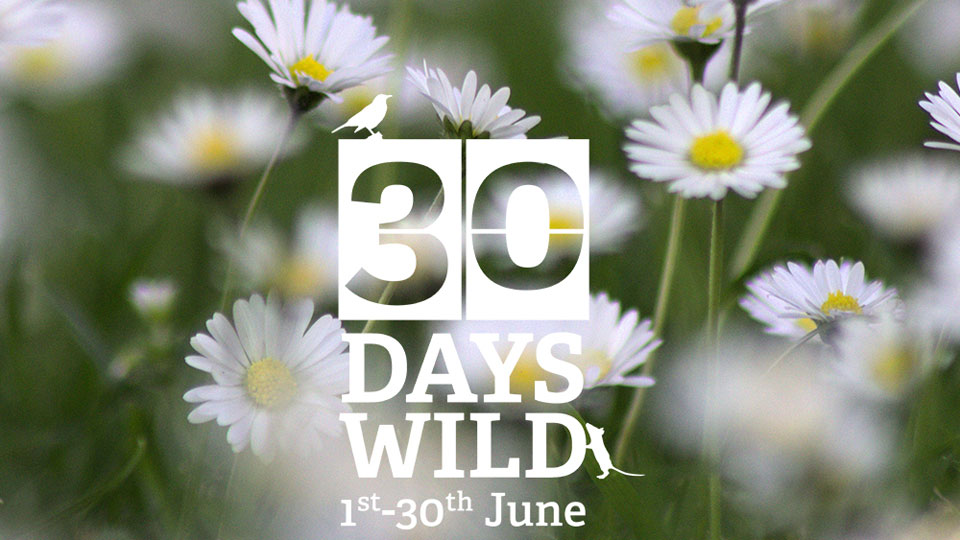 30 Days Wild to connect people with nature