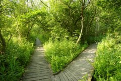 2020-06-12 Ranworth Flora Walk CANCELLED